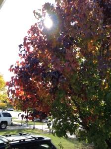 Tree 3:30 p.m.