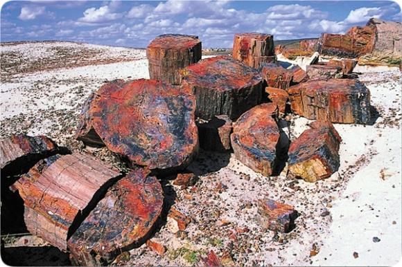 grandcanyon-broken_logs_in_petrified_forest